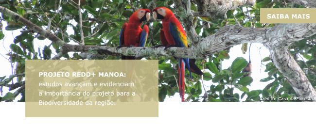 Projeto REDD+ Manoa